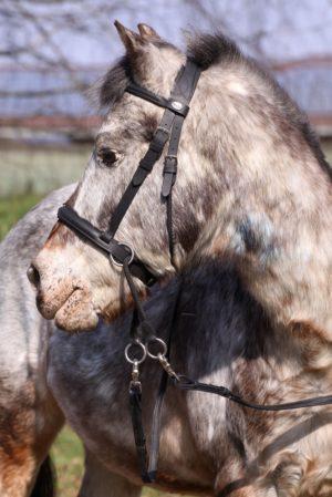 Barefoot Walnut Pony - Gebisslose Zäumung Pony